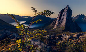 Обои Гора Норвегия Ветвь Каньона Утес Segla, Troms