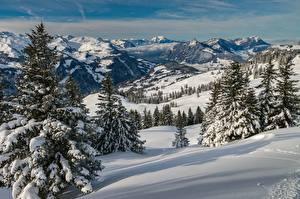 Фото Горы Зимние Швейцария Пейзаж Снег Ели Альпы Schwyz Природа