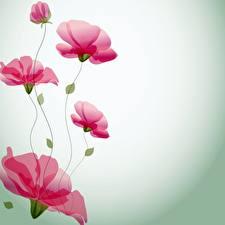 Фотографии Рисованные Мак Шаблон поздравительной открытки Цветы