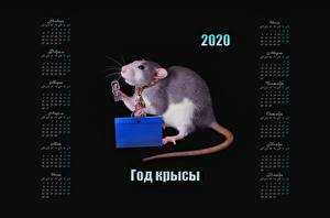Обои для рабочего стола Крыса На черном фоне 2020 Календаря Российские