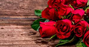 Фото Розы Крупным планом Красные Цветы