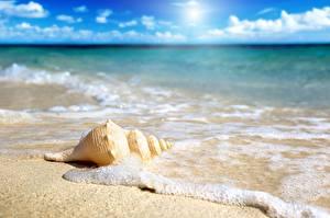 Картинка Ракушки Море Песка Пене Боке Природа