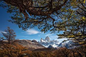 Обои Небо Гора Аргентина Деревьев Ветки Mount Fitz Roy, Patagonia Природа