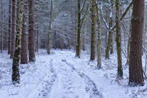 Фотография Зимние Лес Снега Дерево