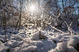 Картинка Зима Снеге Ветка Размытый фон Природа
