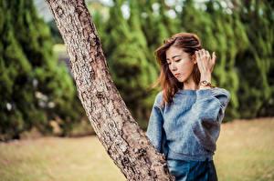 Фото Азиатки Ствол дерева Позирует Рука Боке Свитере Шатенки девушка