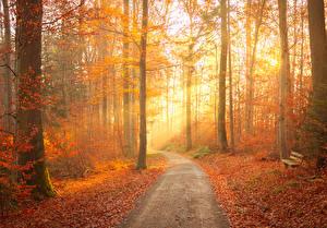 Картинка Осенние Лес Дерево Тропинка Листва Скамья Лучи света Природа