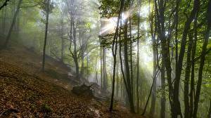 Картинки Осенние Лучи света Тумане Листва Дерево Природа