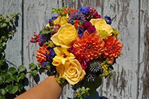 Обои для рабочего стола Букеты Роза Георгины Цветы