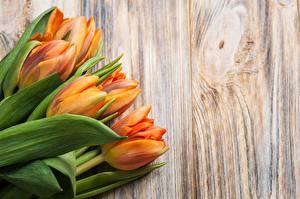 Обои для рабочего стола Букет Тюльпан Доски Оранжевая цветок