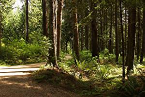 Фото Канада Парк Лес Ванкувер Дерево Тропинка Stanley Park Природа