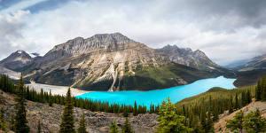 Фото Канада Парки Горы Озеро Лес Пейзаж Банф Ель
