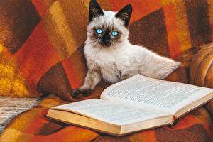 Картинка Коты Книги животное