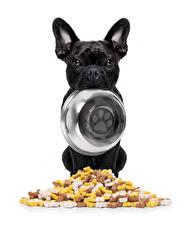 Картинки Собаки Французский бульдог Белый фон Бульдога Тарелка Черный Миска Животные
