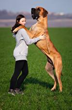 Фотографии Собака Траве Немецкий дог Девушки