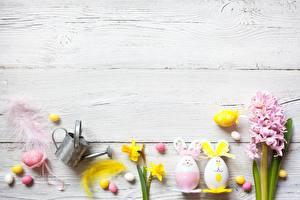 Обои Пасха Яйцо Шаблон поздравительной открытки цветок