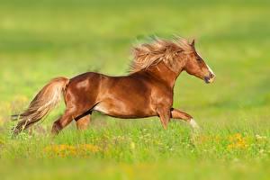 Фотография Лошадь Сбоку Траве Животные