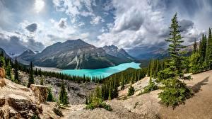 Картинка Озеро Гора Канада Пейзаж Облачно Дерево Банф Alberta, Peyto Lake Природа