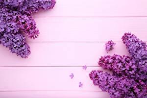 Фото Сирень Фиолетовый Доски Шаблон поздравительной открытки Цветы