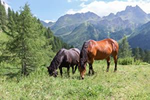 Фото Гора Лошадь Трава 2 Животные