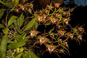 Картинка Орхидеи Цветы