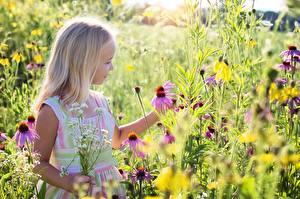 Фотография Лето Девочка Блондинки ребёнок Цветы