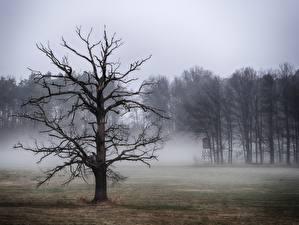 Фотография Дерева Тумана Ветвь Природа