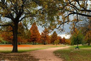 Фотография Штаты Парк Осенние Техас Дерево North Georgetown Природа