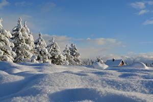 Фотографии Зимние Снег Ели Природа