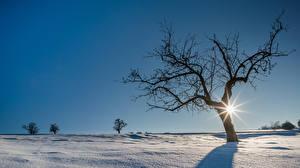 Фотография Зима Снега Деревья Солнце