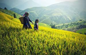 Картинка Азиатки Гора Поля Траве Девочка Пожилая женщина Корзина 2 ребёнок Природа