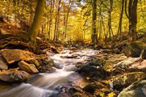 Картинки Осенние Камень Мост Лес Ручеек Мха Природа