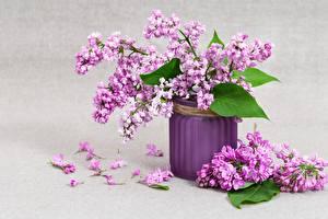 Картинка Букеты Сирень Ваза Лепестки Цветы