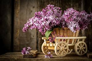 Обои Букеты Сирень Корзинка Лепестки Цветы