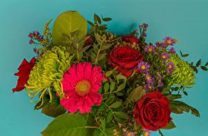 Картинка Букеты Роза Гербера Астры Цветной фон цветок