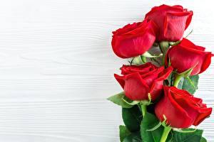 Картинки Крупным планом Роза Шаблон поздравительной открытки Цветы