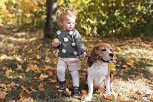 Фотография Собака Осень Размытый фон Девочки Бигля ребёнок Животные