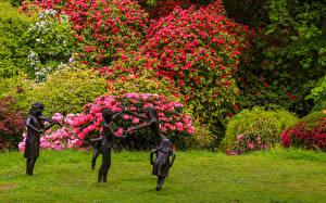 Картинки Англия Сады Рододендрон Скульптура Кустов Ramster Gardens Surrey Природа