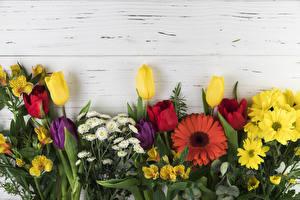 Фотография Герберы Хризантемы Альстрёмерия Тюльпаны Доски цветок