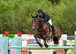 Фотографии Лошадь Верховая езда Прыгает Униформе В шлеме спортивные