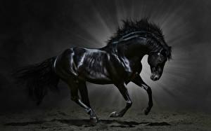 Фотография Лошади Лучи света Черный Животные