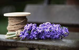 Фото Гиацинты Размытый фон Фиолетовый цветок