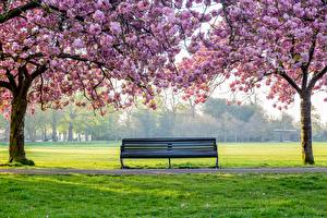 Фото Парк Цветущие деревья Дерево Траве Скамья Природа