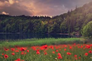 Фото Мак Лес Озеро Траве Природа