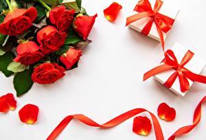 Фото Роза День всех влюблённых Ленточка Коробки Подарок Бантики цветок