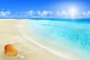 Обои Море Берег Ракушки Пляжа Природа