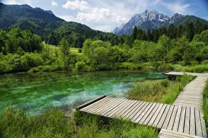 Картинка Словения Озеро Пирсы Гора Лес Zelenci Lake Природа