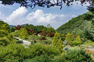 Обои Южная Корея Сеул Парк Кустов Дерево Природа