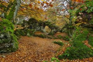 Фотография Испания Осенние Парк Камни Мхом Лист Деревья Opakua Agurain Природа