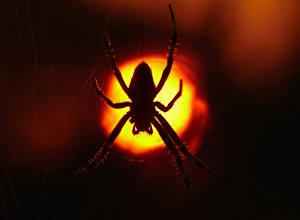 Фотография Пауки Ночью Животные